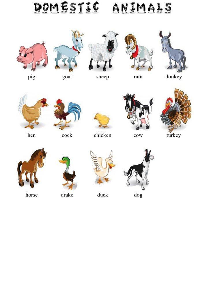 Životinje na engleskom