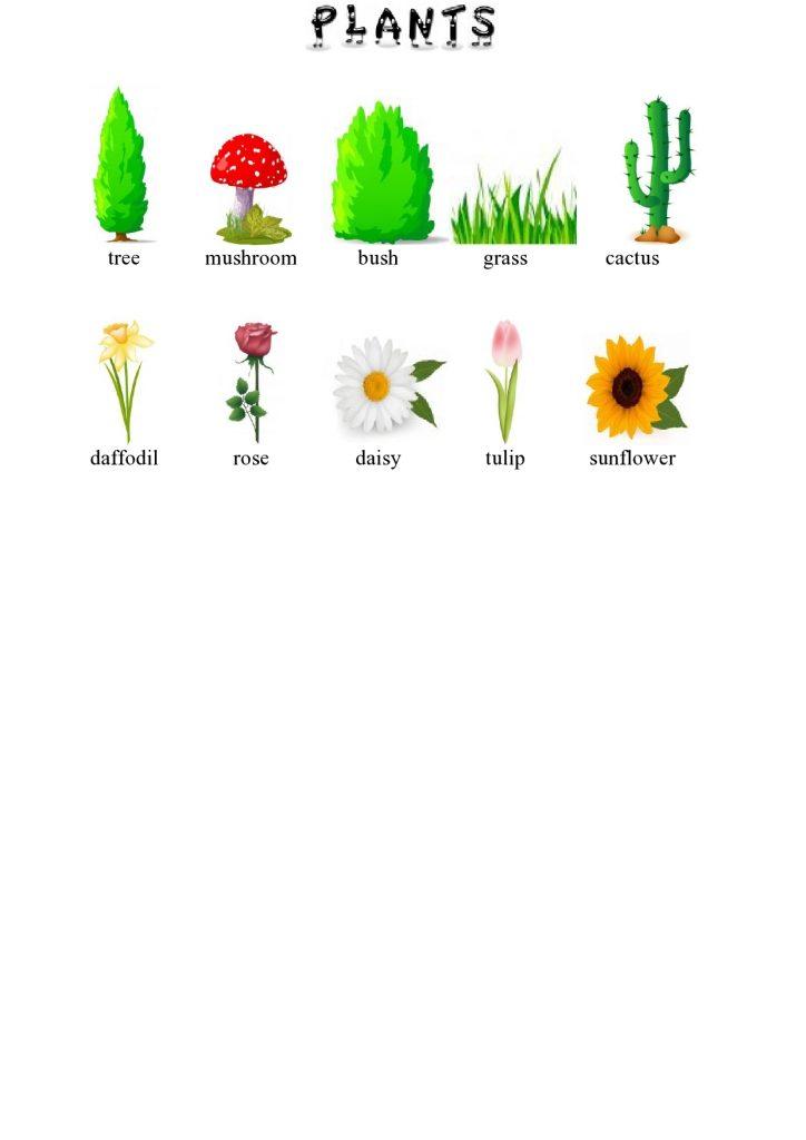 Biljke na engleskom